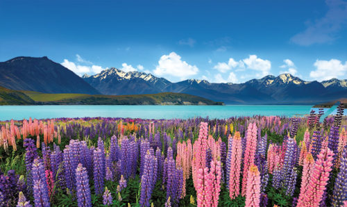 4 Romantic New Zealand Escapes