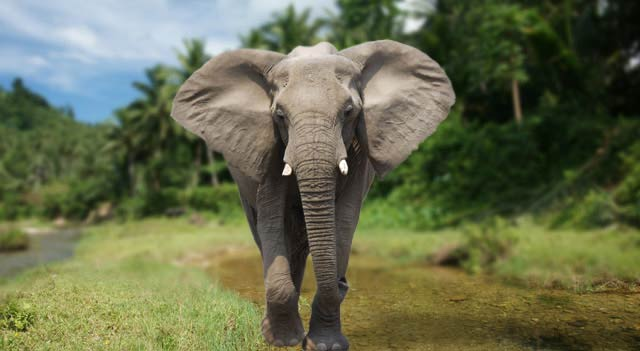 Top 5 Elephant Encounters With Sanctuary Retreats